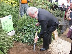 El president del Cor Sängerrunden plantant el cirerer.